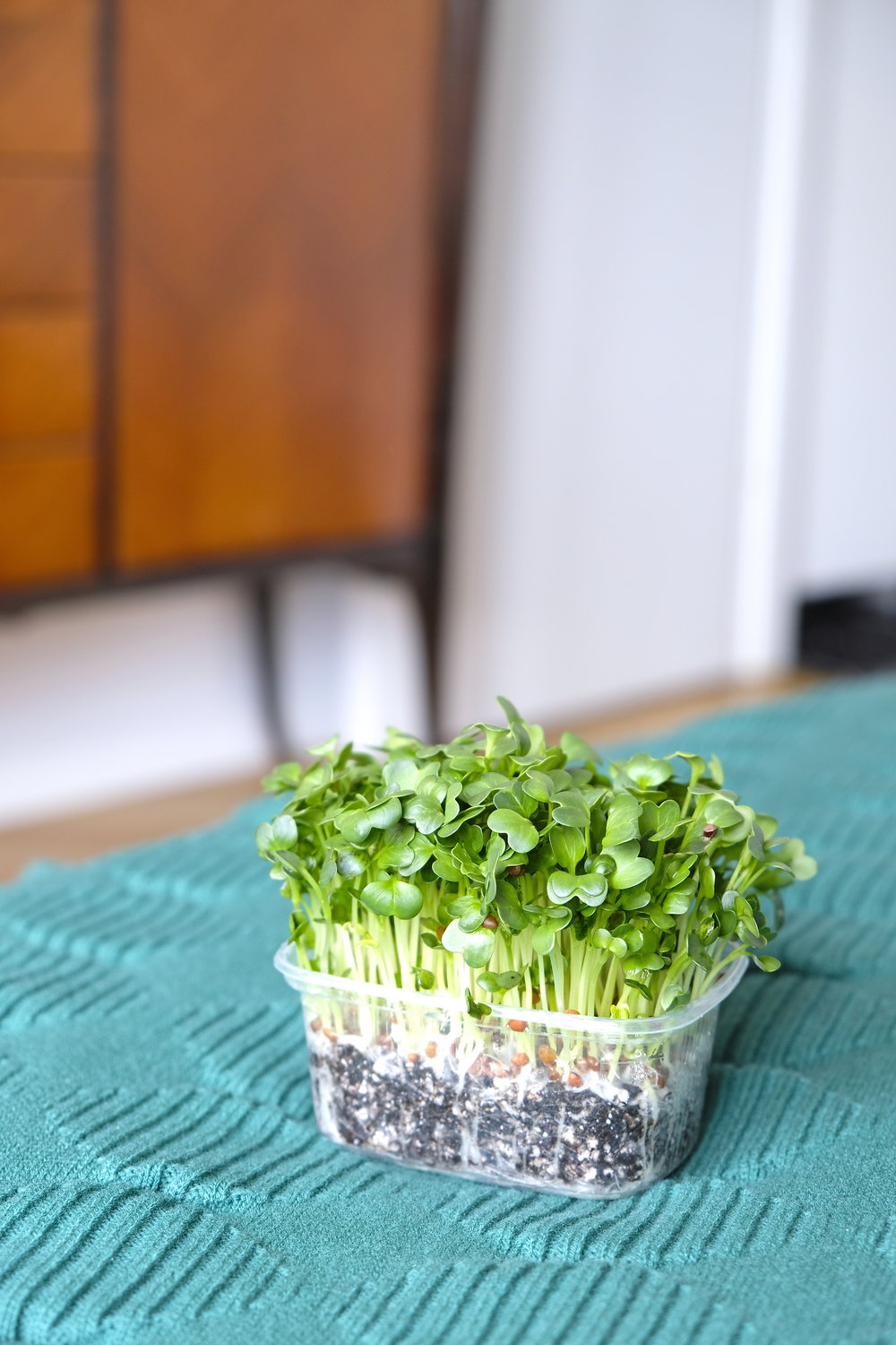 2_Vlastari MicroGreens The Nature Project.JPG