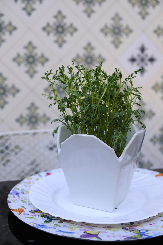 Microplante vlastari Microgreens_Dinner Stories.JPG