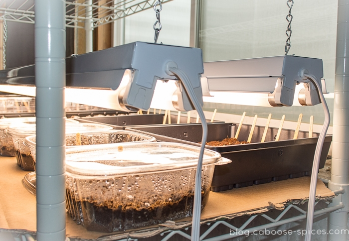 How To Build An Easy Diy Grow Light For Seedlings Caboose Spice