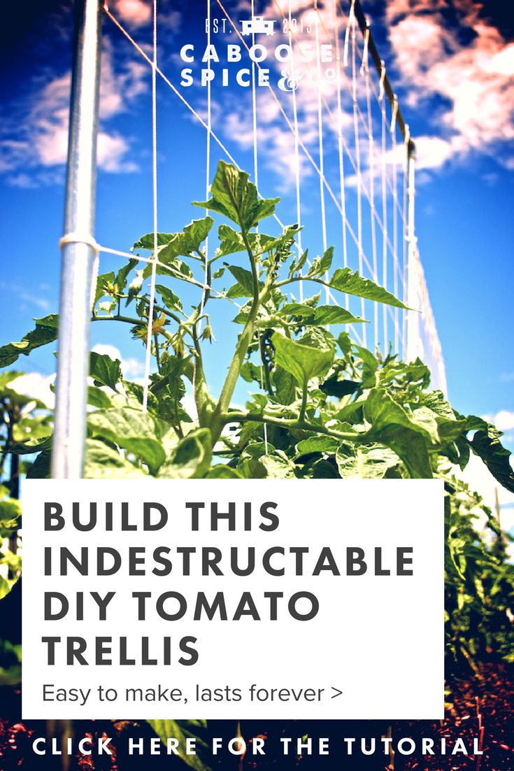 Indestructable DIY tomato trellis.png