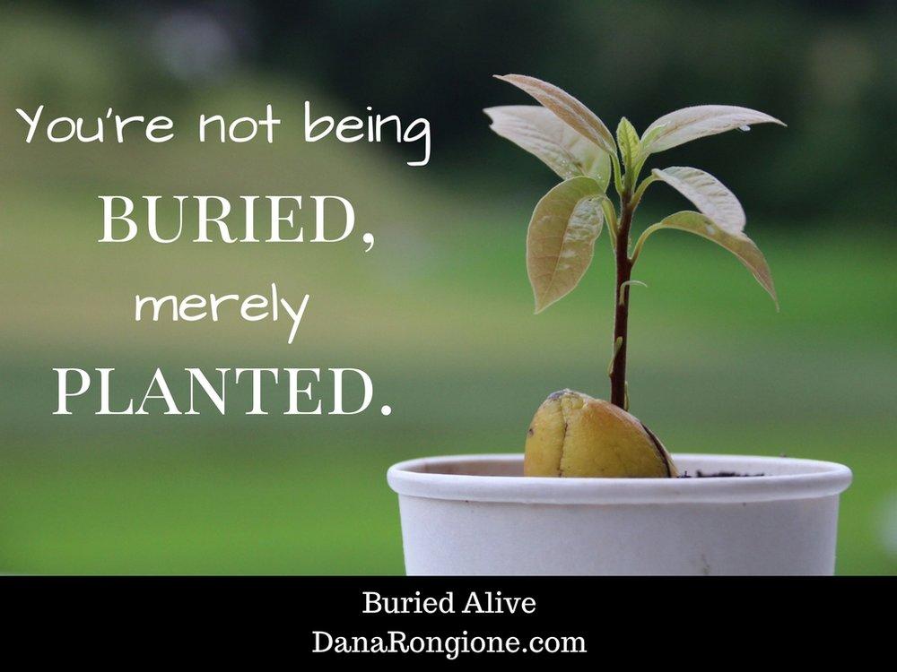 Buried AliveDanaRongione.com.jpg