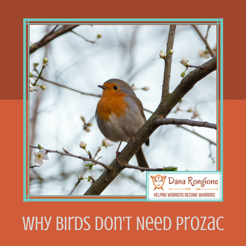 Why Birds Don't Need Prozac.png