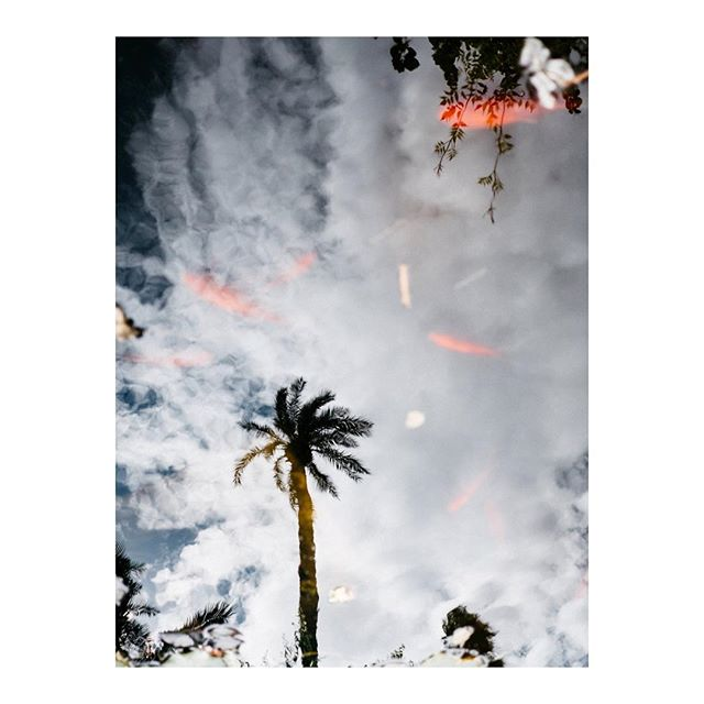 Palm tree reflection. Soon on my printshop.