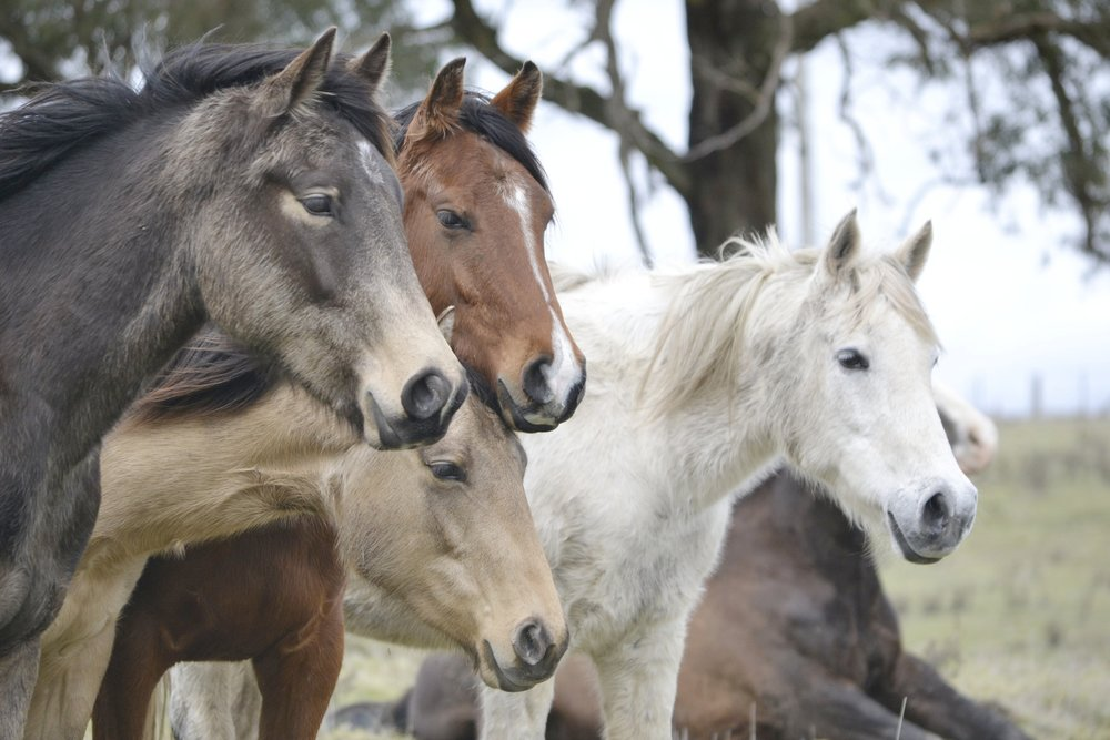 Our horses... -