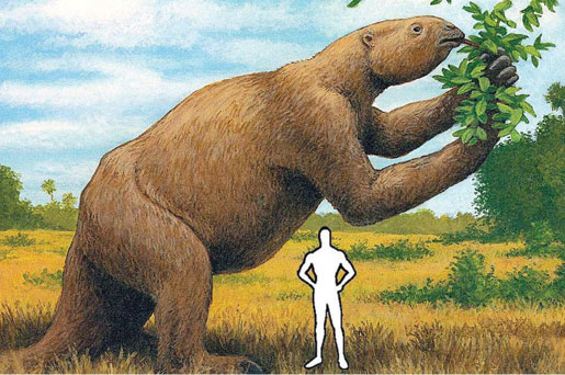 Giant Land Sloth (from Factzoo.com)