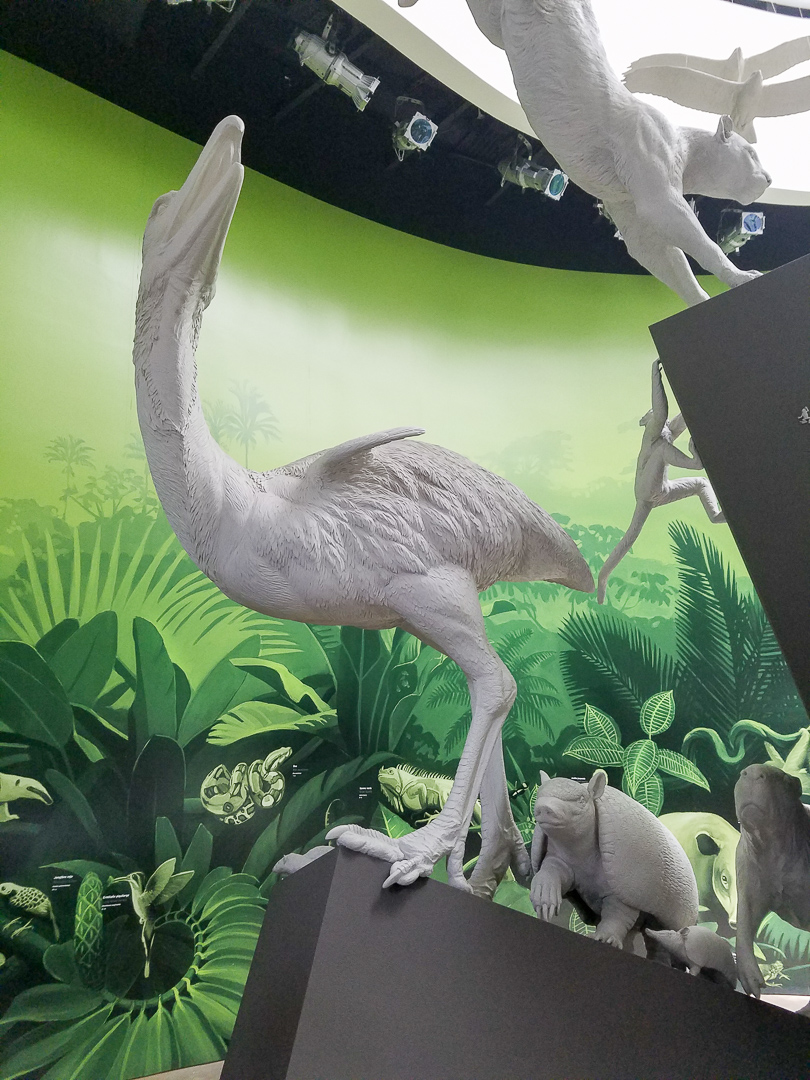 The flightless terror bird (another animal that went extinct once North and South America were joined as a single land mass) was almost 10 feet tall. Although the terror bird is hilarious to look at and imagine running around flapping his tiny chicken wings, it was seriously carnivorous, could run up to 30 mph and sever a horse's spine with one blow. I would not want to come across one of these bad boys.