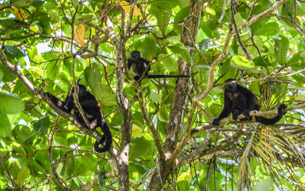 This picture is a bit blurry, but I like it because you can see the baby monkey in the middle!