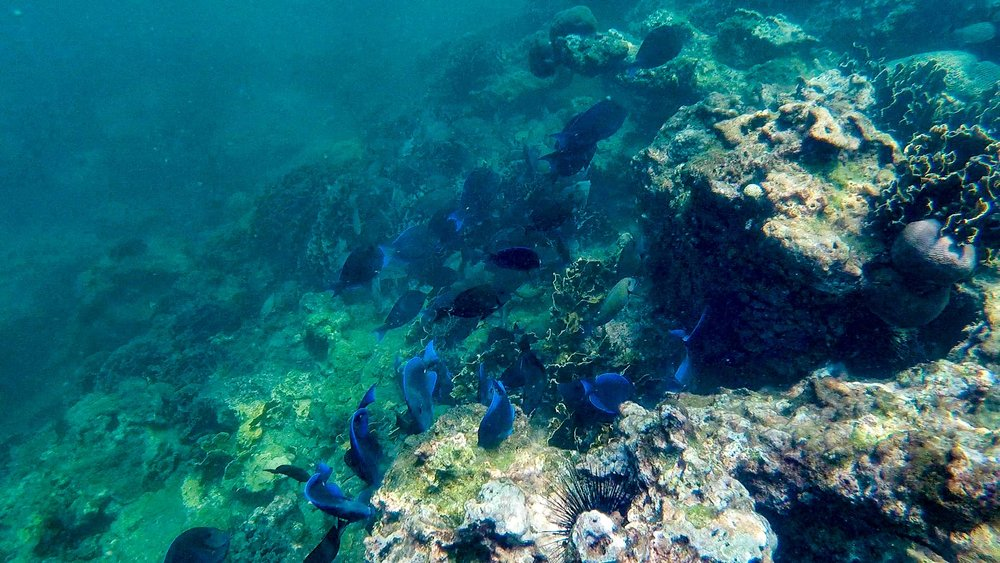 black and blue fishes.jpg