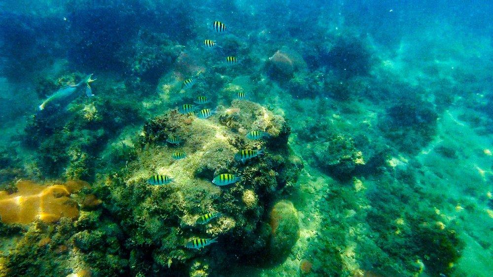 yellow fishes 1.jpg