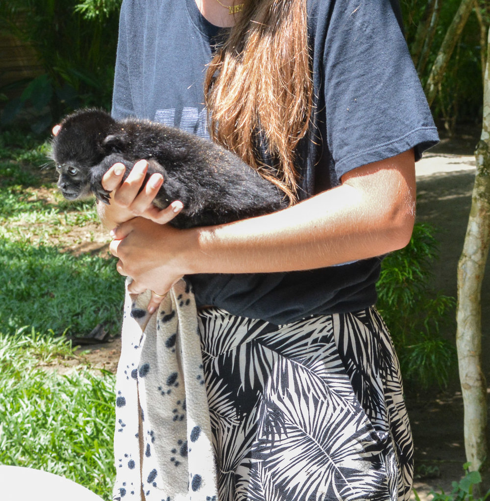 This baby monkey had a broken arm, so had to be constantly held by a volunteer