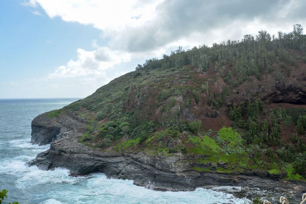 Kilauea Point, a refuge for Hawaii's state bird, the nēnē, or the Hawaiian Goose