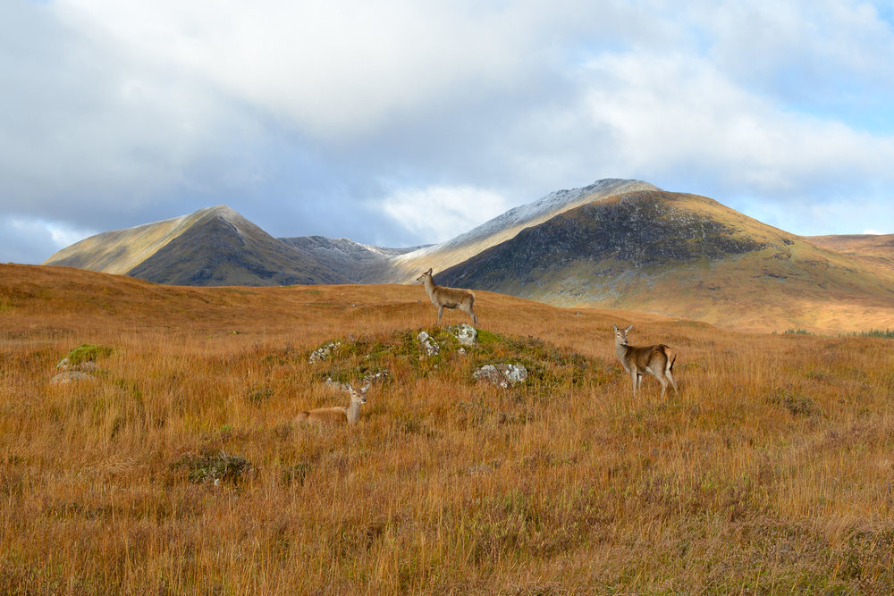 Their sign said they are were waiting here in protest until they become a post card for the West Highlands Way