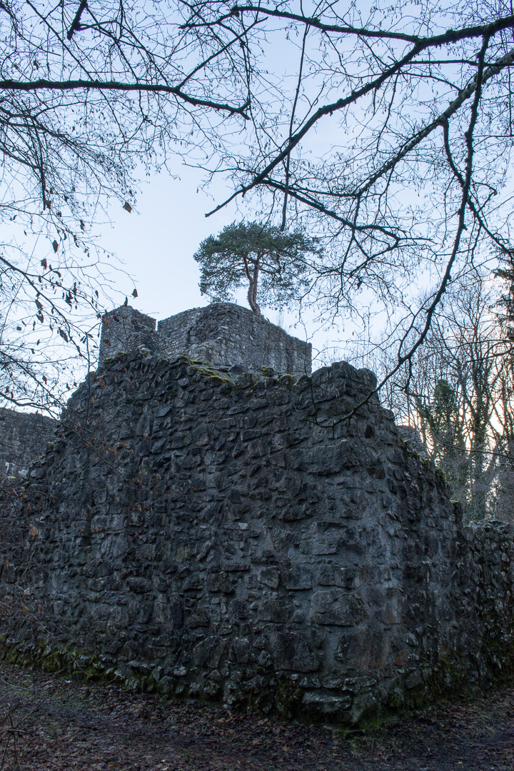 There's a tree on top of that castle!!