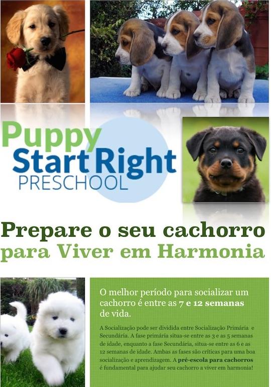 Pré-Escola ( Aulas para Cachorros )