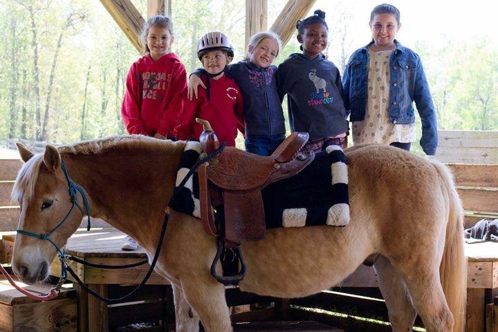 HORSE THEME -