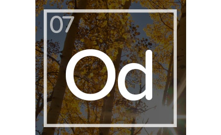 07-CCA-Organizational-Development-icon.jpg