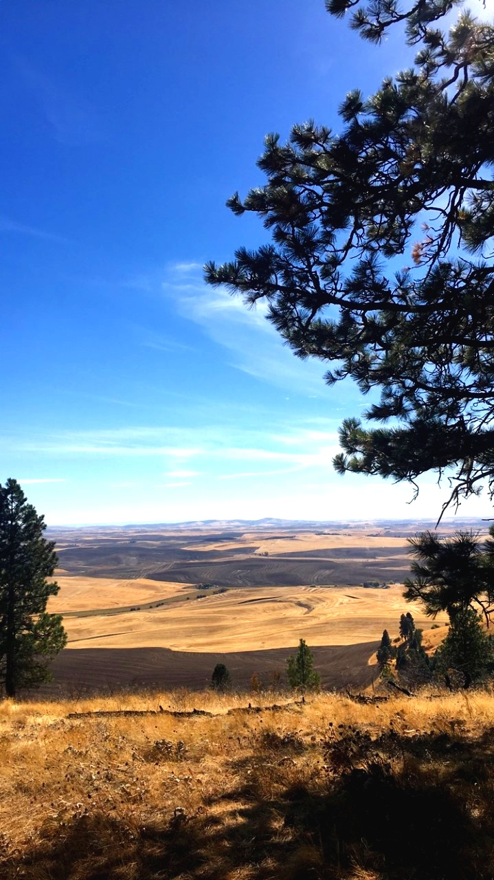 The view from the top of Kamiak Butte. Photo credit: Kynan Rutan