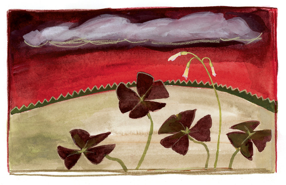 Red Sky with Oxalis