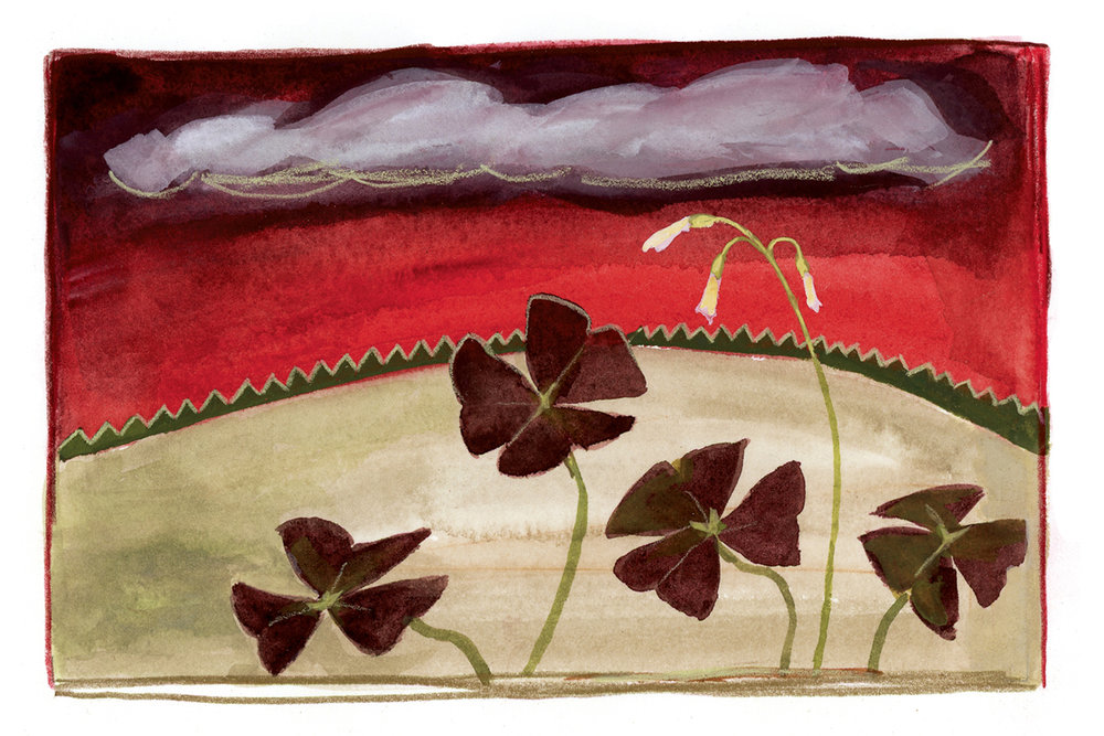 Red Sky with Oxalis, 2-21-18.jpg