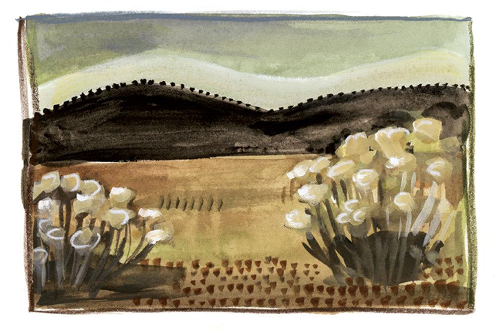 Rabbitbrush and Hills