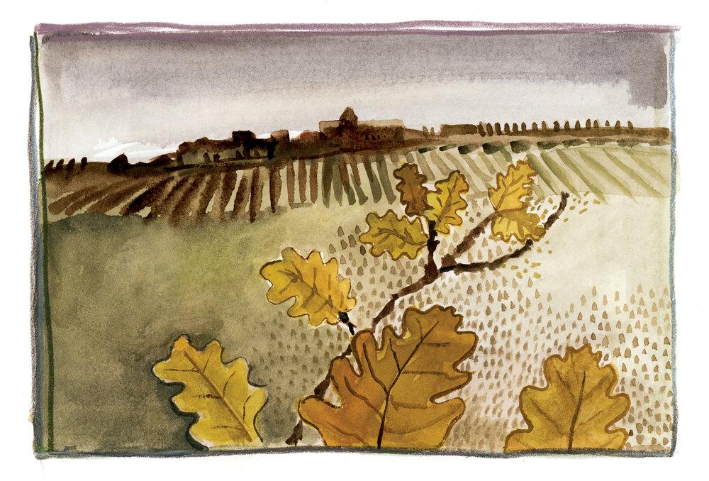 Autumn Oaks, Auvillar, France