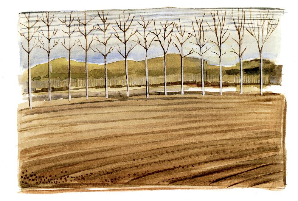 Birch Trees, Auvillar