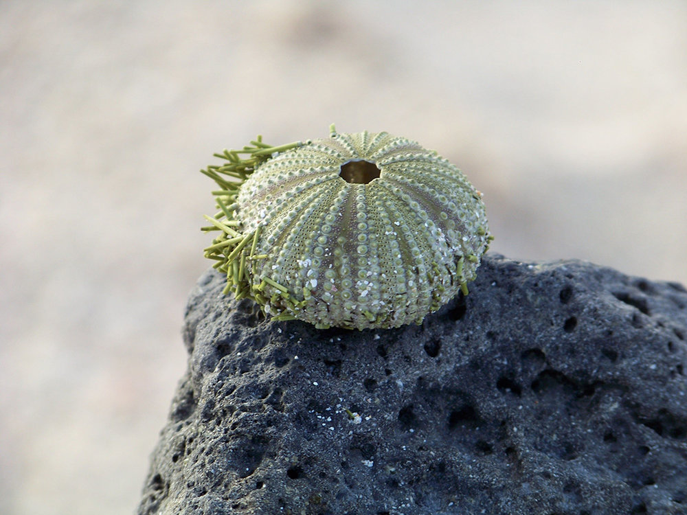 3.mollusc-galapagos.jpg