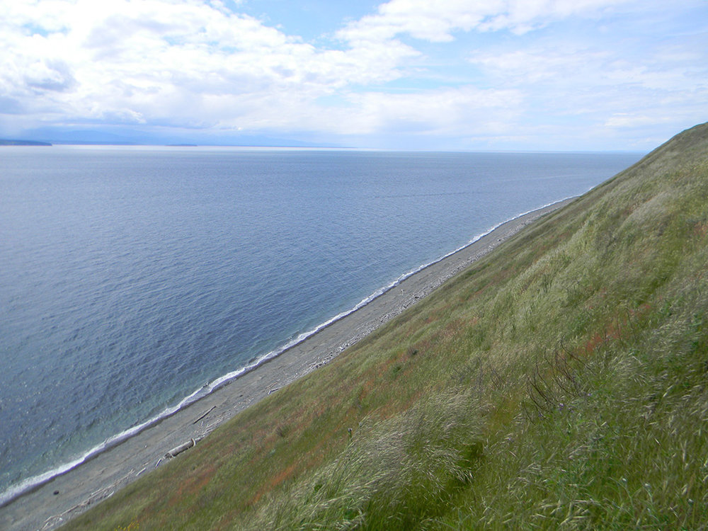15.whidbey-shoreline-2.jpg