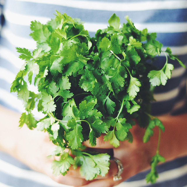 Turntable-Kitchen-holds-cilantro