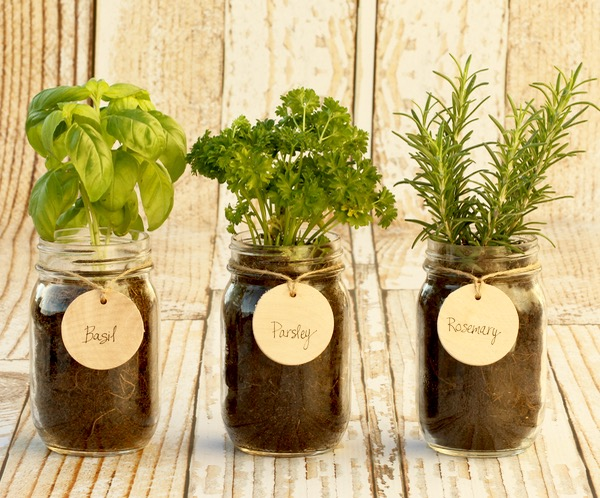 DIY-Indoor-Mason-Jar-Herb-Garden-from-TheFrugalGirls.com_.jpg