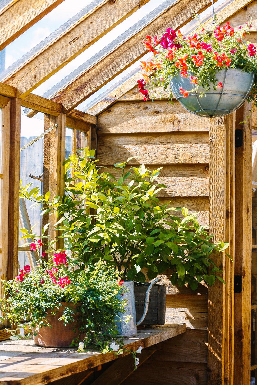 How to Start Gardening.jpg
