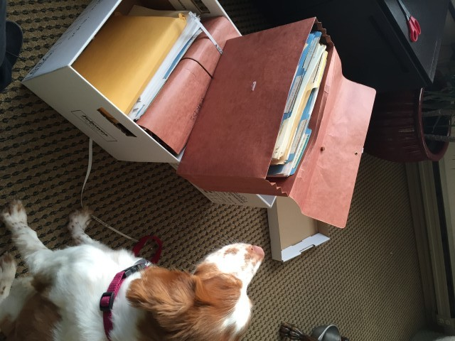 Photo:  Nala helping me to go through a few boxes of old papers.