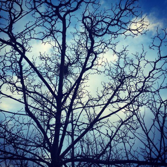 Photo:  tree by me