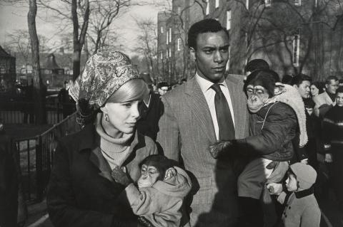Garry Winograd, Central Park Zoo, New York, 1967
