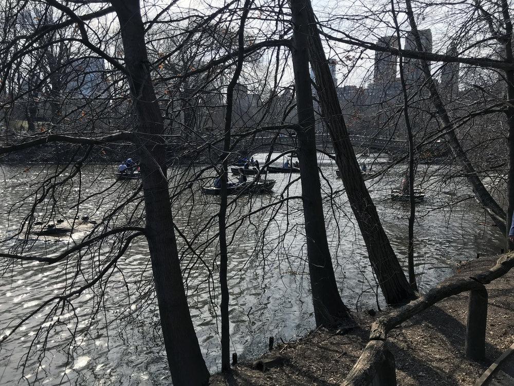 סנטרל פארק, ניו יורק