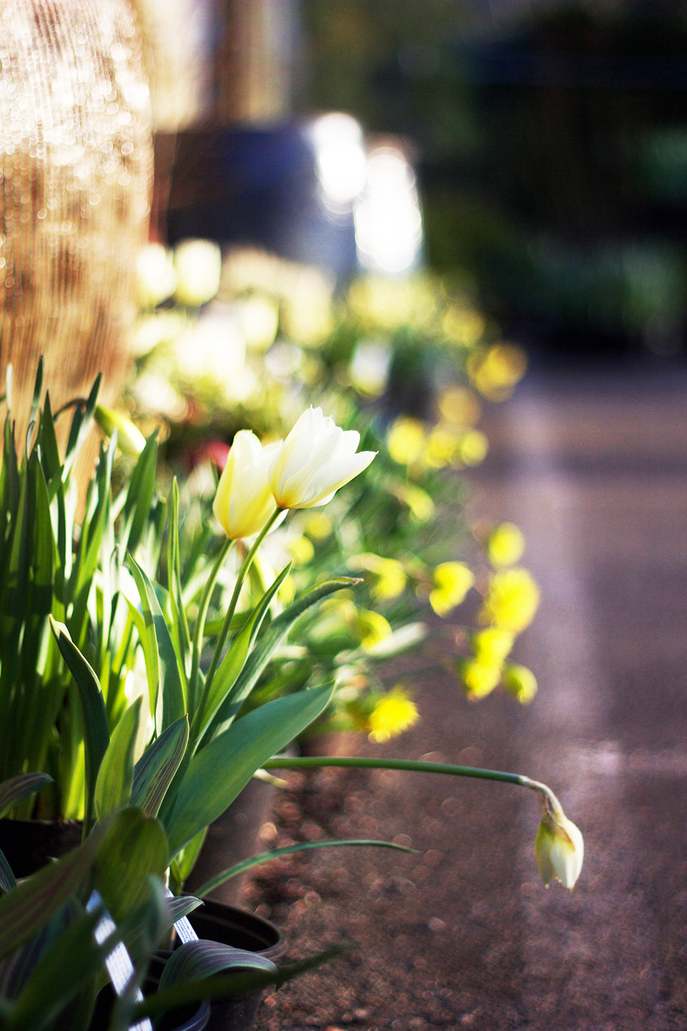 Beautiful Grounds - and discover what beautiful plants and fun decor awaits you!From spring flowering bulbs to trees, shrubs and seeds, whatever your interests are, we have something for everybody!