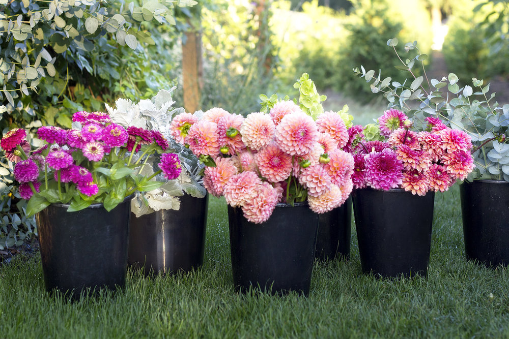 reduced_ss_bucket_sales_bulk_flowers_dahlias_zinnias.jpg