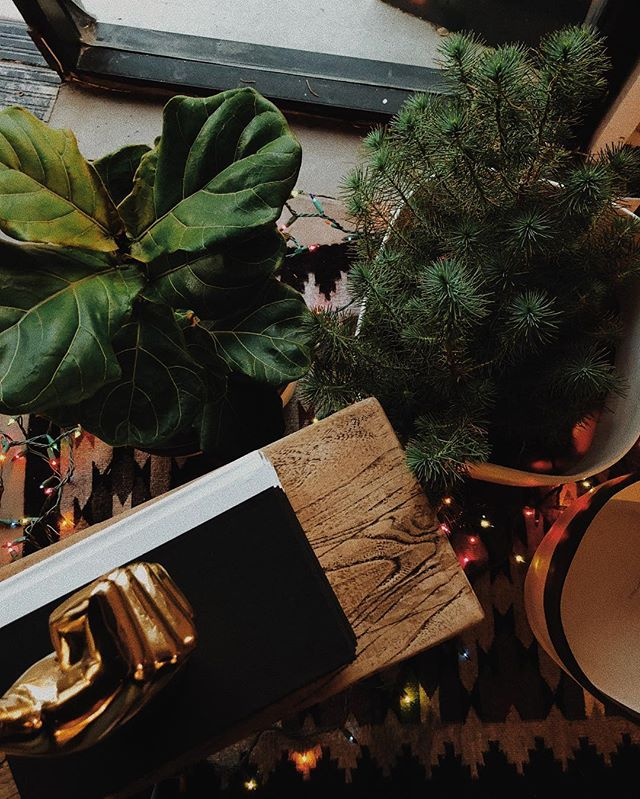Tell Santa that I only want greenery this year, either in plant or paper form 😏🌿 💵
