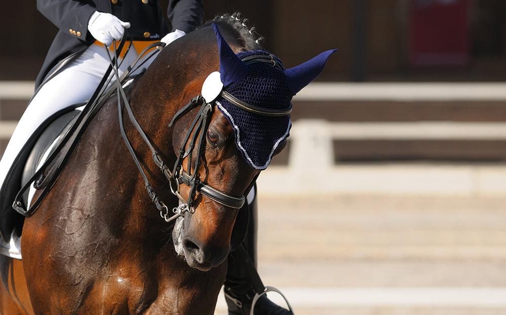 horse banner-1.jpg