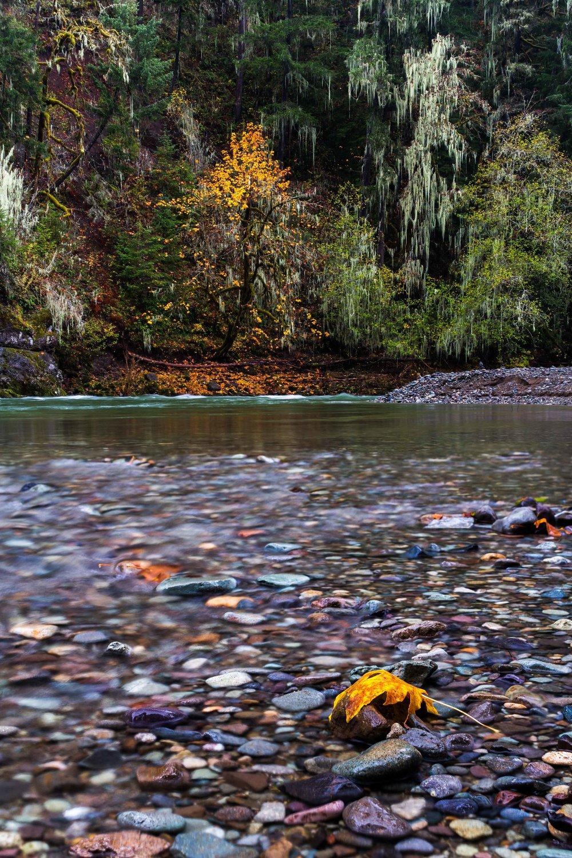 Autumn on the Santiam  Santiam River, Oregon