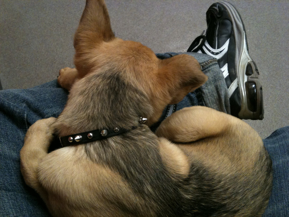first-emergency-vet-visit-he-had-kennel-cough_5187906831_o.jpg