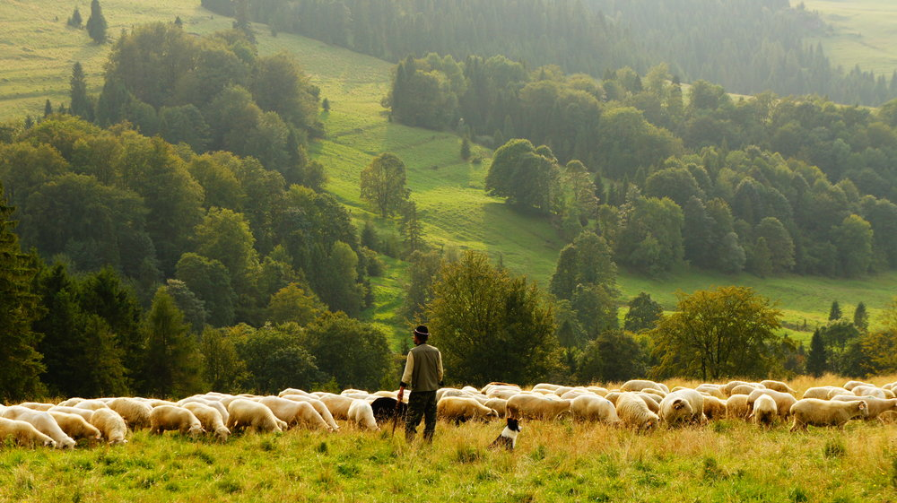 Shepherd watching his flock. Public-Private Partnerships can help bring the sheep's valuable wool to the world with the creation of roads, bridges, and ports.