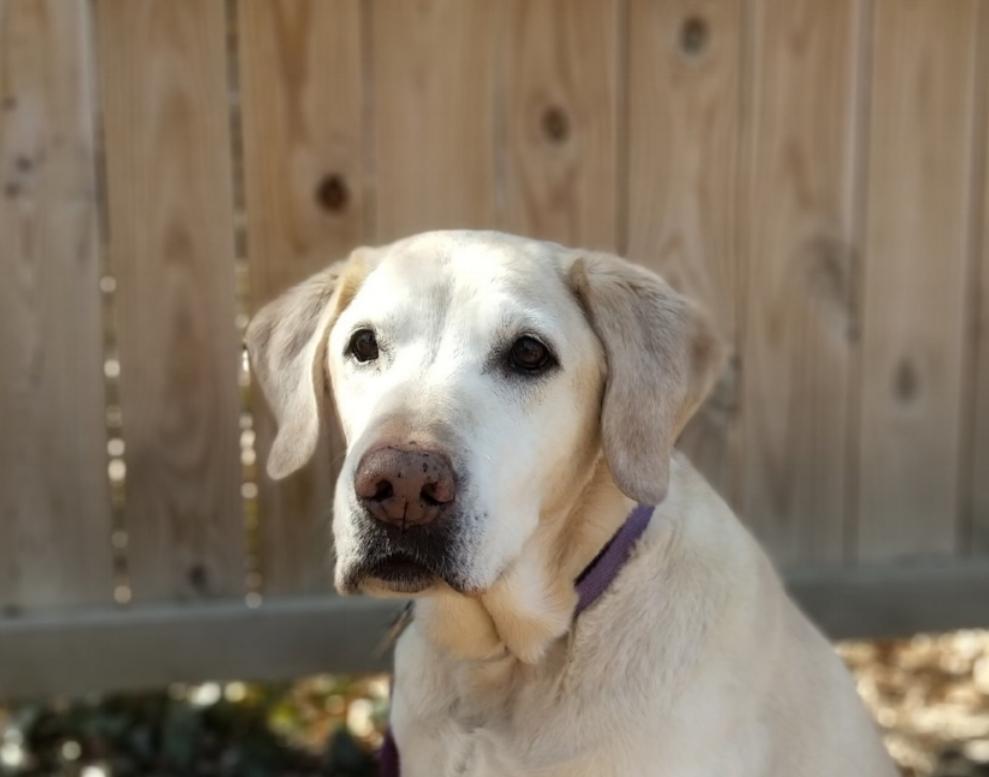 Rosie - Best.Dog.Ever