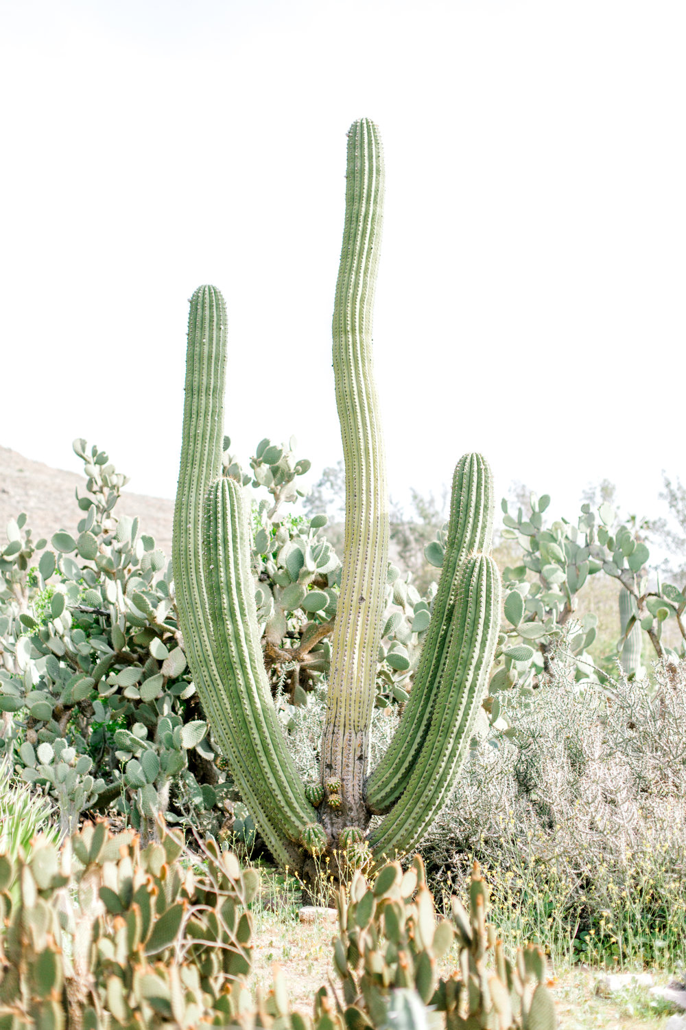 Jessica Sgubin Photography Atlanta Portrait photographer los angeles la salvation mountain greenhouse cactus garden moorten botanical garden cabazon dinosaurs santa monica joshua tree-11.jpg