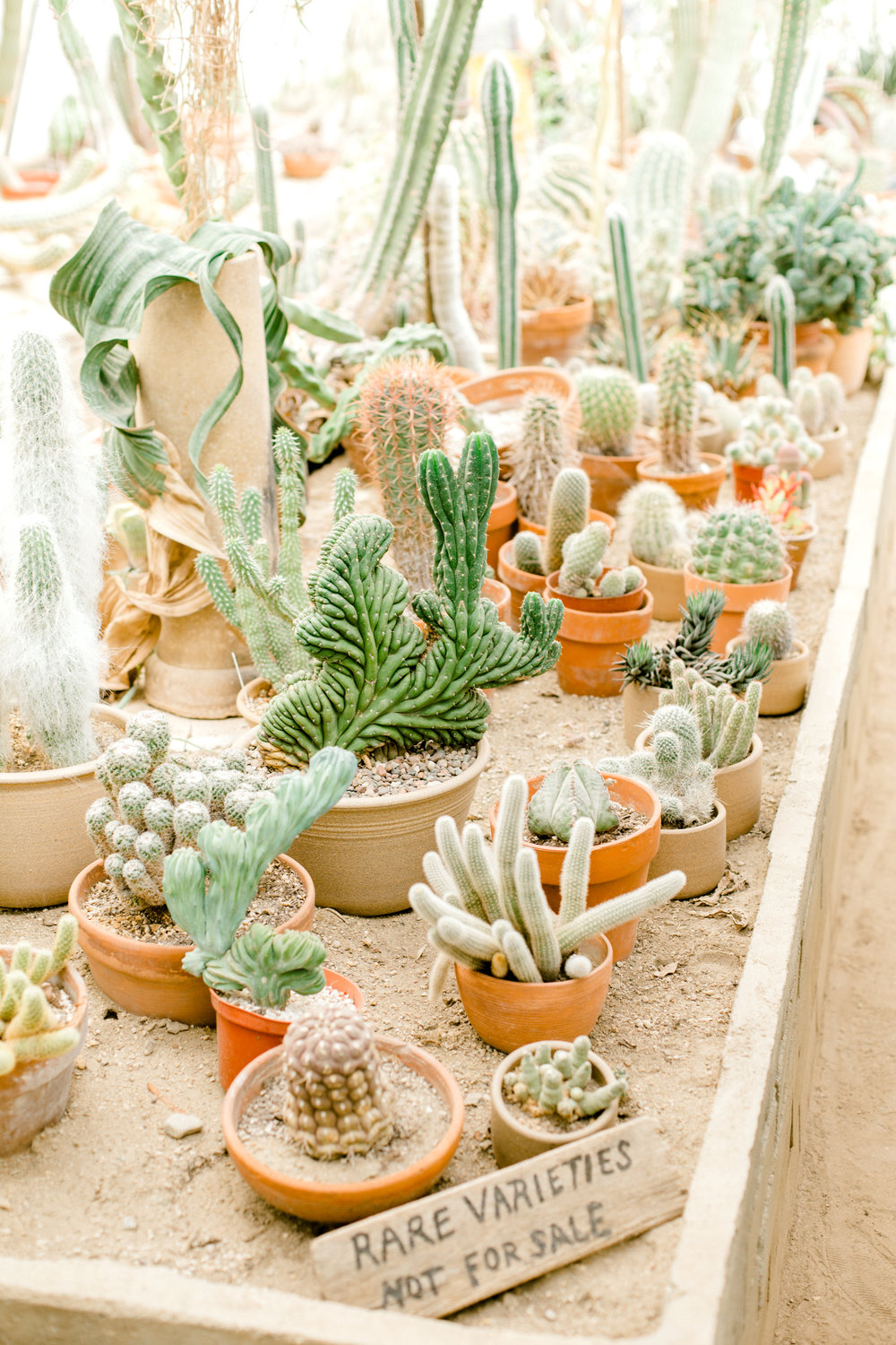Jessica Sgubin Photography Atlanta Portrait photographer los angeles la salvation mountain greenhouse cactus garden moorten botanical garden cabazon dinosaurs santa monica joshua tree-44.jpg