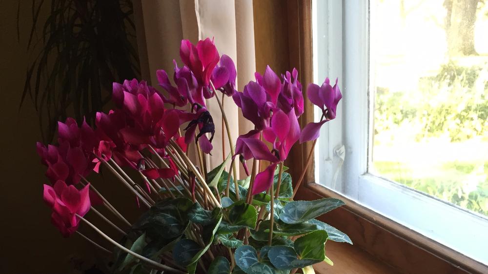 plants-love