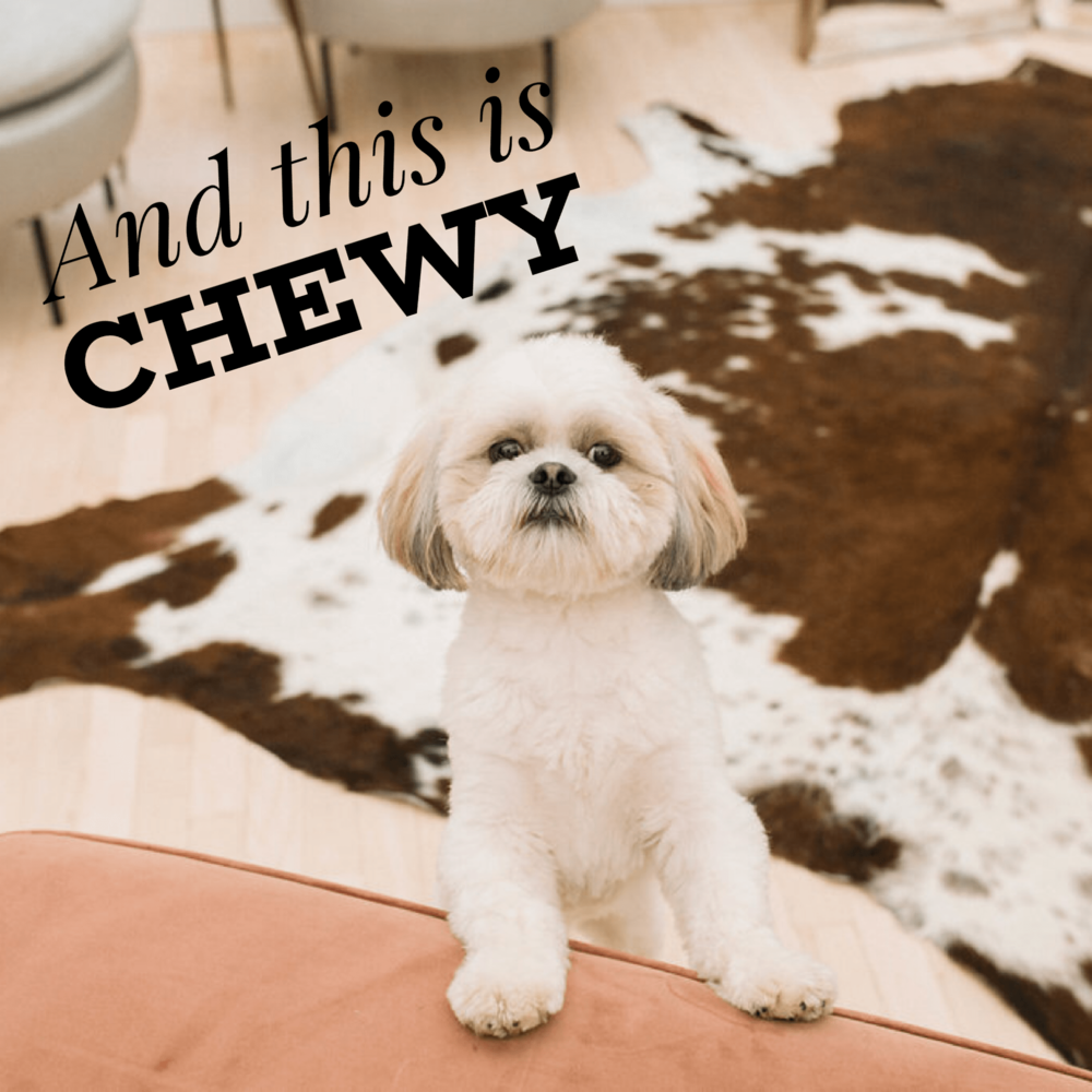 This is Chewy the Gilded Social shop dog.PNG