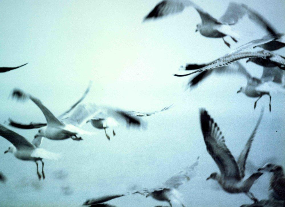 gulls538.jpg