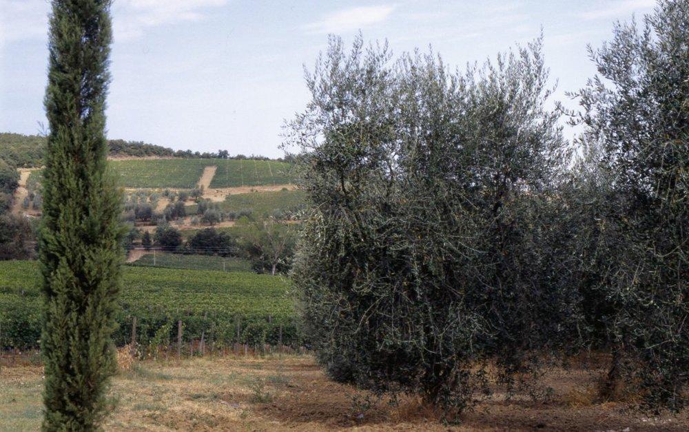 02_Vigna_Le_Chiuse_di-Sotto-1200x753.jpg