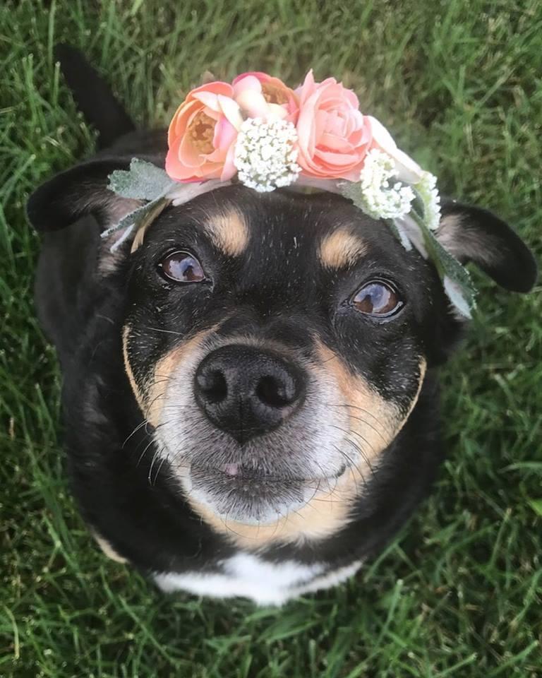 crowndog 1.jpg